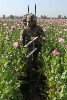 Walking through a poppy field with a ladder. Photo: Sergeant Andy Reddy