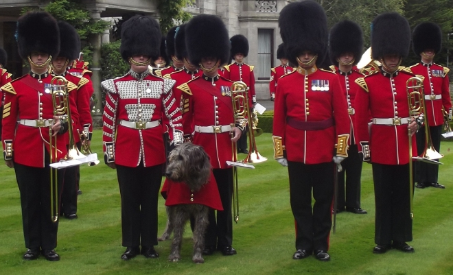 A final farewell to the Regimental Mascot Conmael.