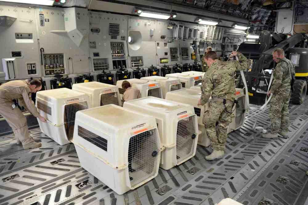 Herrick 18 Stories: Military Dogs homeward bound (3/5)
