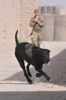 MWD – 'Am I there yet?'