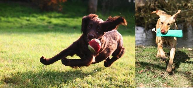 Boots and Lola at work and at play